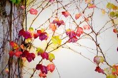 De herfstbladeren op muur Stock Afbeelding