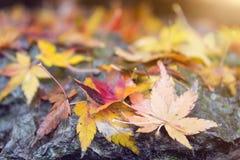 De herfstbladeren op steen Royalty-vrije Stock Afbeelding