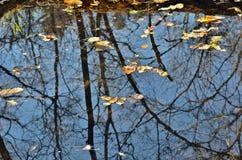 De herfstbladeren op water 13 Stock Afbeeldingen