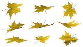 De herfstbladeren - op witte achtergrond worden geïsoleerd die Stock Fotografie