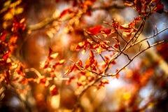 De herfstbladeren op de zon en de vage bomen Dalingsachtergrond stock foto