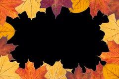 De herfstbladeren op zwarte achtergrond Royalty-vrije Stock Afbeeldingen