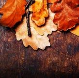 De herfstbladeren over houten achtergrond met lege exemplaarruimte voor t Stock Fotografie