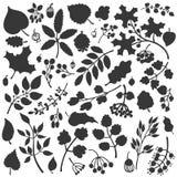 De herfstbladeren, takken, bessenreeks Dalingssilhouet Stock Foto