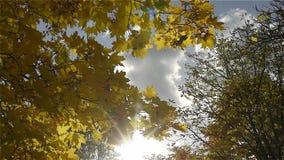 De herfstbladeren tegen de blauwe hemel stock footage