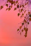 De herfstbladeren tegen een purper-oranje zonsondergang Stock Afbeeldingen