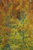 De herfstbladeren van de daling stock afbeelding