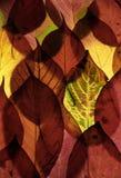 De herfstbladeren van de kleur royalty-vrije stock fotografie