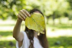 De herfstbladeren van de meisjesholding in zijn handen Stock Afbeelding
