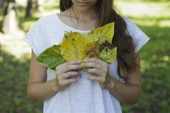 De herfstbladeren van de meisjesholding in zijn handen Royalty-vrije Stock Afbeelding
