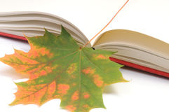 De herfstbladeren van het boek wih Stock Afbeelding
