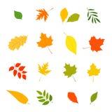 De herfstbladeren van verschillende bomen royalty-vrije illustratie
