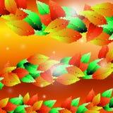 De herfstbladeren van verschillende kleuren Stock Foto's