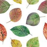 De herfstbladeren van verschillende kleuren getrokken waterverf royalty-vrije illustratie