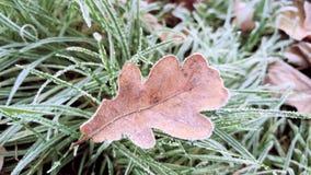 De herfstbladeren in vorst stock videobeelden