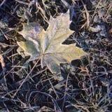 De herfstbladeren in vorst Stock Afbeelding