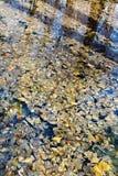 De herfstbladeren in water van bosmeer Royalty-vrije Stock Foto's