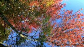 De herfstbladeren in water worden weerspiegeld dat stock footage