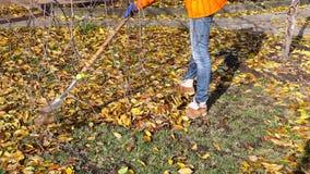 De de herfstbladeren worden geharkt stock video
