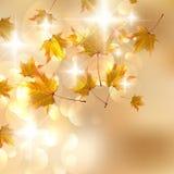 De herfstbladeren, zeer ondiepe nadruk. Stock Afbeeldingen