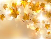De herfstbladeren, zeer ondiepe nadruk. Stock Fotografie