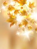 De herfstbladeren, zeer ondiepe nadruk. Royalty-vrije Stock Fotografie