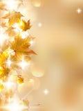 De herfstbladeren, zeer ondiepe nadruk. Royalty-vrije Stock Foto