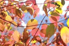 De herfstbladeren in de zonneschijn stock foto's