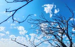 De herfstblauw Stock Foto's
