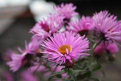 De herfstbloem Stock Foto's