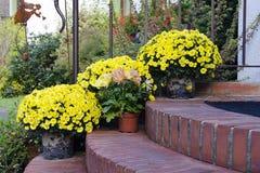 De herfstbloemen op drempels Royalty-vrije Stock Afbeeldingen