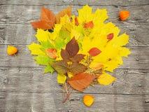 De herfstboeket Royalty-vrije Stock Foto's