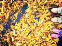 De herfstboeket Stock Afbeeldingen