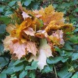 De herfstboeket Stock Afbeelding