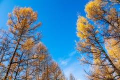 De herfstbomen Royalty-vrije Stock Afbeeldingen