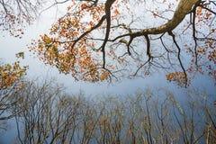 De herfstbomen Stock Foto