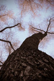De herfstbomen stock afbeelding