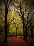 De herfstbomen royalty-vrije stock fotografie