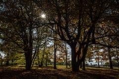 De herfstbomen, de zon die door de takken glanzen Stock Foto