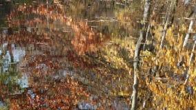 De herfstbomen die in een meer nadenken stock footage