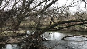De herfstbomen door de rivier De herfstvorst Somber koud weer stock footage