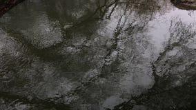 De herfstbomen door de rivier De herfstvorst Somber koud weer stock video
