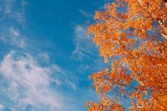De herfstbomen in een bos Stock Foto's