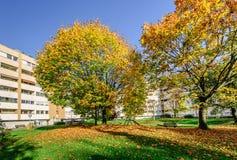 De herfstbomen in een het leven blok Stock Foto