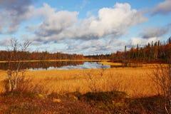 De herfstbomen en installaties in Moermansk, Rusland stock fotografie