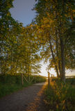 De herfstbomen en kleine brug bij zonsondergang Royalty-vrije Stock Afbeeldingen
