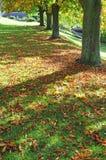 De herfstbomen en schaduwen Royalty-vrije Stock Afbeelding
