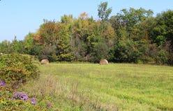 De herfstbomen, gerolde hooibalen en asters Stock Fotografie