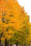 De herfstbomen heel wat kleur royalty-vrije stock afbeelding