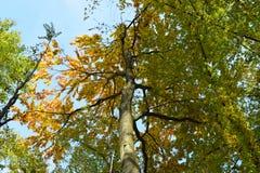 De herfstbomen in het bos in Hongarije Royalty-vrije Stock Foto's